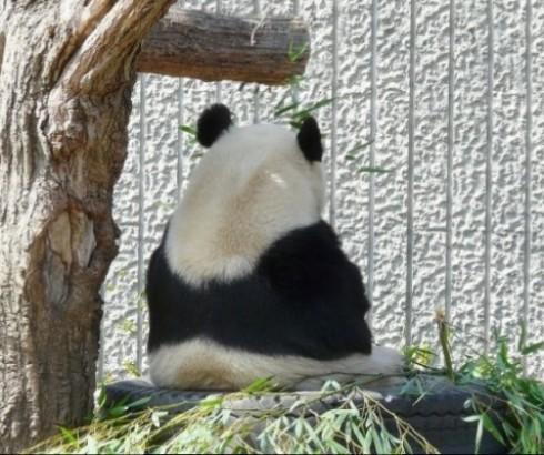 パンダ館がお勧め♪神戸市立王子動物園